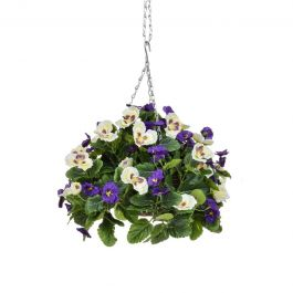 25cm Hanging Basket Pansy Ball – Purple & White