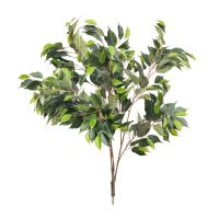 85cm MultiBranch Ficus Branch